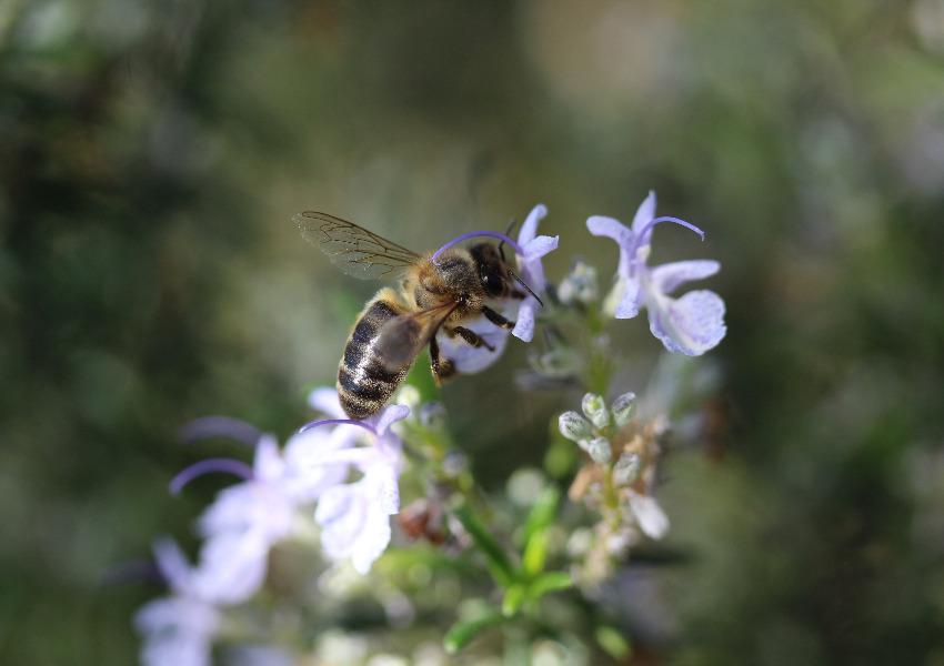 # Salvar as abelhas e os agricultores